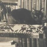 10 домашни любимци, вдъхновили известни писатели
