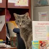 4 котки, които живеят щастливо в библиотеки [галерия]